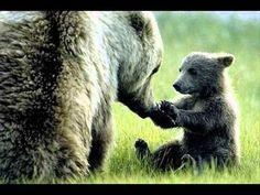 alaskan brown bear cub and mother - so human. so cute. Grizzly Bear Cub, Bear Cubs, Polar Bear, Tiger Cubs, Teddy Bear, Alaskan Brown Bear, Photo Animaliere, Mother Bears, Love Bear