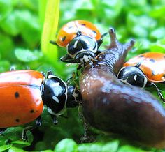 Home Remedies for Gardening Pest