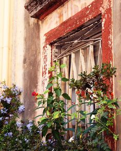 Rustic Home Decor - Window Garden Print - Corfu Greece Photography - Greek Art - Rust Red Purple Flowers - Mediterranean Travel Photo- 8x10. $30.00, via Etsy.