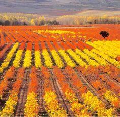 Autumn in La Rioja, Spain Places Around The World, Around The Worlds, Rioja Spain, Rioja Wine, Train Map, Paraiso Natural, Wine Vineyards, Ebro, Spain Holidays