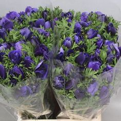 Anemone Mistral Plus Blue Ex, commonly known as wind flowers - 2018 Wedding Trend: Ultra Violet Purple. For lilac and purple wedding flowers to suit your colour scheme, visit our website at www.trianglenursery.co.uk/fresh-flowers!