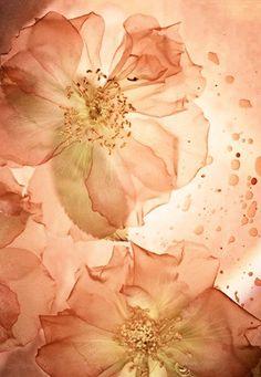 Color Peach