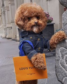 Poodles Holiday shopping at Louis Vuitton Cute Dogs And Puppies, I Love Dogs, Doggies, Cute Funny Animals, Funny Dogs, Puppy Cut, Dog Grooming Business, Dog Costumes, Cute Animal Pictures