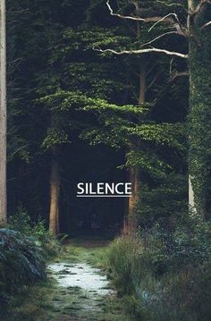 Silence on the forest