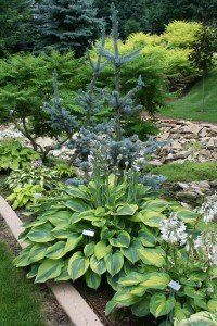 foliage color and form, tips for perennial gardens - inc. plants to Zone 4; some I want some I have...