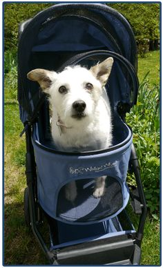 NEW!  Walkin' Pet Stroller from HandicappedPets.com -  maker of the Walkin' Wheels dog wheelchair!