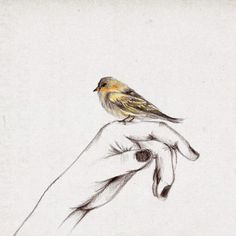 +/my little bird Hand Drawing Reference, Drawing Hands, Line Drawing, Figure Drawing, Trois Crayons, Guache, Bird Drawings, People Drawings, Pencil Drawings