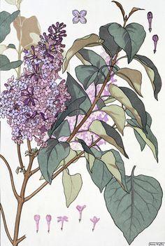 Lilac by Eugene Grasset, Swiss, 1845-1917. Grasset was a Swiss decorative artist.