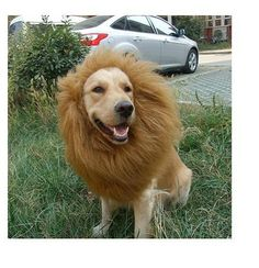 Lion Mane  large to  xx large sizes on Etsy...hahah @Alyssa Kendzior buddy's halloween custome?