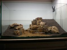 """We love to see the evolution of a scape. This one is called """"My West Bank"""", by a fellow named Vis The scape uses petrified wood to build mountain-like structures. Aquarium Landscape, Nature Aquarium, Tropical Aquarium, Aquarium Fish Tank, Planted Aquarium, Tropical Fish, Fish Tanks, Aquascaping, Vivarium"""