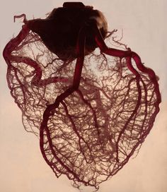 The human heart stripped of fat and muscle, with just the angel veins exposed. It's more than just a muscle.