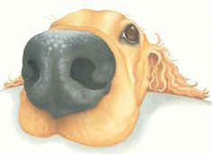 golden retriever painting print  (Honey)  Lizzie Hall