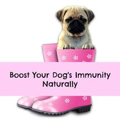Immune supplements for dogs. A growing number of people are turning to herbal remedies to try to keep their dogs healthy, at least judging by the number of supplements now on the market. Not all of these remedies, however, contain natural ingredients. You still need to carefully read the labels.