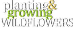 Grow Flordia's Wildflowers