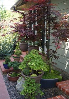 Lovely porch with potted maples