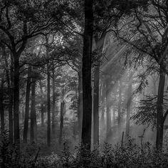 Isle Adam forest