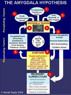 ME / CFS / FMS Recovery: The Amygdala Hypothesis (Ashok Gupta)