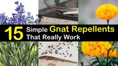 Discover 15 simple homemade gnat repellents that really work. Keep gnats away indoor and outdoor with simple ingredients like vinegar and essential oils. Make a variety of DIY pest control sprays that are safe for kids.