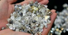 Geologist Discovers Plant that only grows near Diamonds | Geology IN