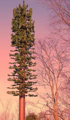 This #sunrise compliments this monopine #celltower wonderfully, don't you think?