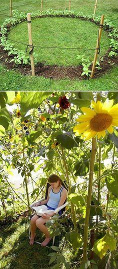 Kaila's Place | Sunflower Oasis