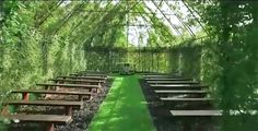 Tree Church by Barry Cox is a living, breathing chapel made of real trees in New Zealand.