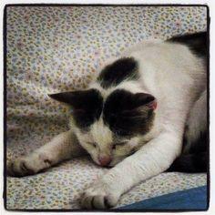 #prayer #cat #cats #catstagram #muslim #tobia #pois #sleeping #pet #pets #petstragram #instapet #cute #dreaming #instanature #instamoment #tenderness #sexyanimal #animal #novellaorchidea #novella #orchidea #raccontierotici #racconti #ebook #ricardo #tronc