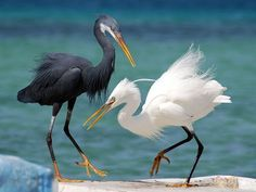 Dancing Couple - couple, cool, big, picture, dancing, birds