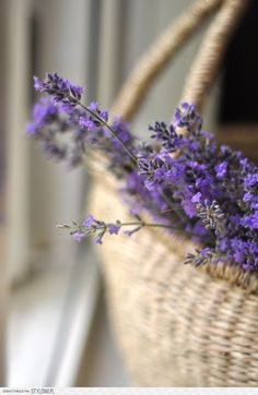 1294 best         Lavender  plants  flowers  images on Pinterest     Flowers in baskets