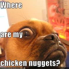 funny chicken pictures with captions | Where are my chicken nuggets?