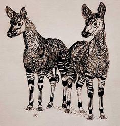 Pair of Okapi, pen