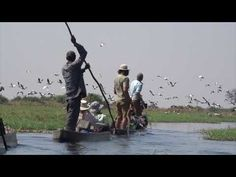 The aim of the Delta crossing was to complete a survey on the wetland birds of the Delta. Gliding past the vast array of species within this water wonderland is just breathtaking and a must do for any keen birders. National Geographic, Wilderness, Past, Wonderland, The Incredibles, Birds, Water, Image, Gripe Water