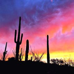 698 best tucson southern arizona images green valley county