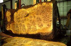 English Oak Burl at it's best. Walnut Burl, Wood Sample, Wood Source, Got Wood, Live Edge Wood, Wood Slab, Woodworking Wood, Wood Texture, Wood Species