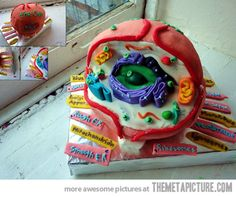 Canadian artist/photographer NicoleWilliam created this cell model cake for her class in I hereby grant her a retrospective A+. Biology Cell Cake (via Geeks Are Sexy) Science Cake, Science Party, Life Science, Science Pics, Mad Science, Science Ideas, Science Experiments, Cupcakes, Cupcake Cakes