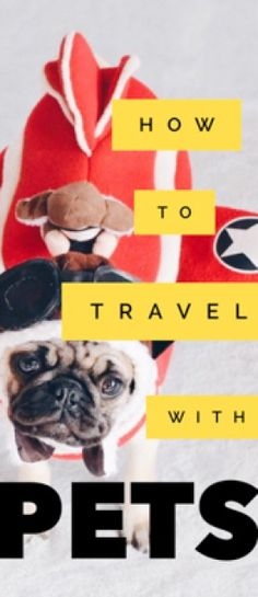 International Pet Travel Tips: Your Guide to Taking Pets Abroad Travel Articles, Travel Advice, Travel Guides, Travel Tips, Travel Destinations, Travel Info, Travel Hacks, Travel Stuff, Travel Couple