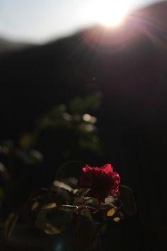 """''L'inutile fiore spruzzato dal suo sangue, costella ormai tutte le valli dell'Eurota. É primavera, Tànatos, e il ragazzo non la vedrà"""".    Leucò /05"""