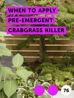 Learn How to Use Potting Soil to Seed a Lawn Remove Urine Smell, Bermuda Grass, Blueberry Bushes, Lawn Maintenance, Grass Seed, Sod Grass, Artificial Turf, Weed Killer, Top Soil