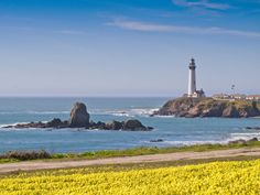 Spring is here at the Pigeon Point light house!