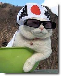 Shironeko, o gato que virou meme na internet