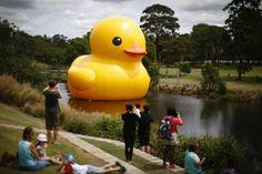 The giant inflatable Rubber Duck installation by Dutch artist Florentijn Hofman floats on the Parramatta River, as part of the 2014 Sydney Festival, Australia.