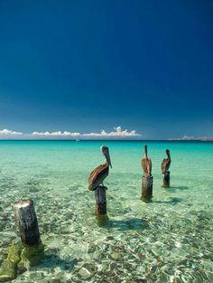 Florida Keys.  Salt Life