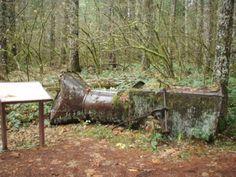 Whistle Punk Trail Hike - Hiking in Portland, Oregon and Washington
