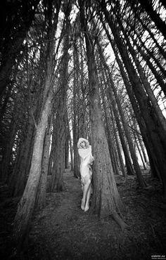 https://flic.kr/p/RH9NNE | In the woods