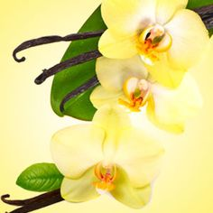 Vanilla Blossoms Fragrance Oil | Natures Garden Fragrance Oils #vanillascent #fragranceoils #vanillablossoms