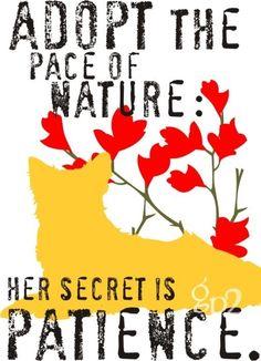 adopt the pace of nature: her secret is patience. (australian shepherd)