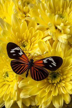 Orange Black Butterfly, Garry Gay