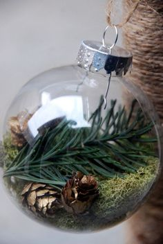 pine branches and pinecones inside clear glass bulb