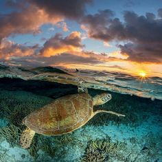 Sea Turtle over under by Jordan Robins