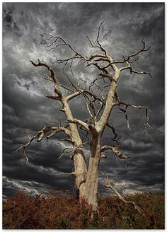 Old dead tree...still standing against the storms.....